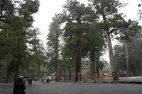 中央の巨木の向こうが正宮