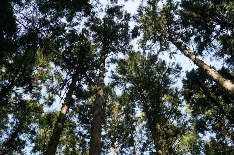 山側の木々