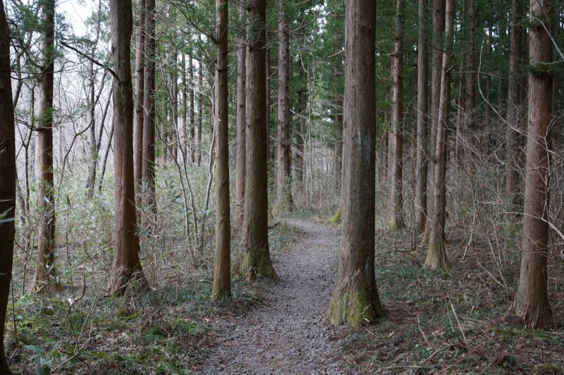 滝壺への道