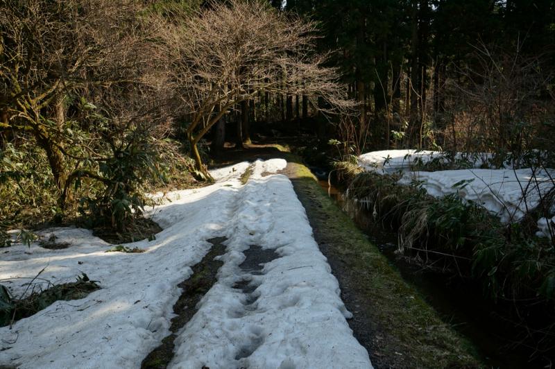まだまだ雪が残っています
